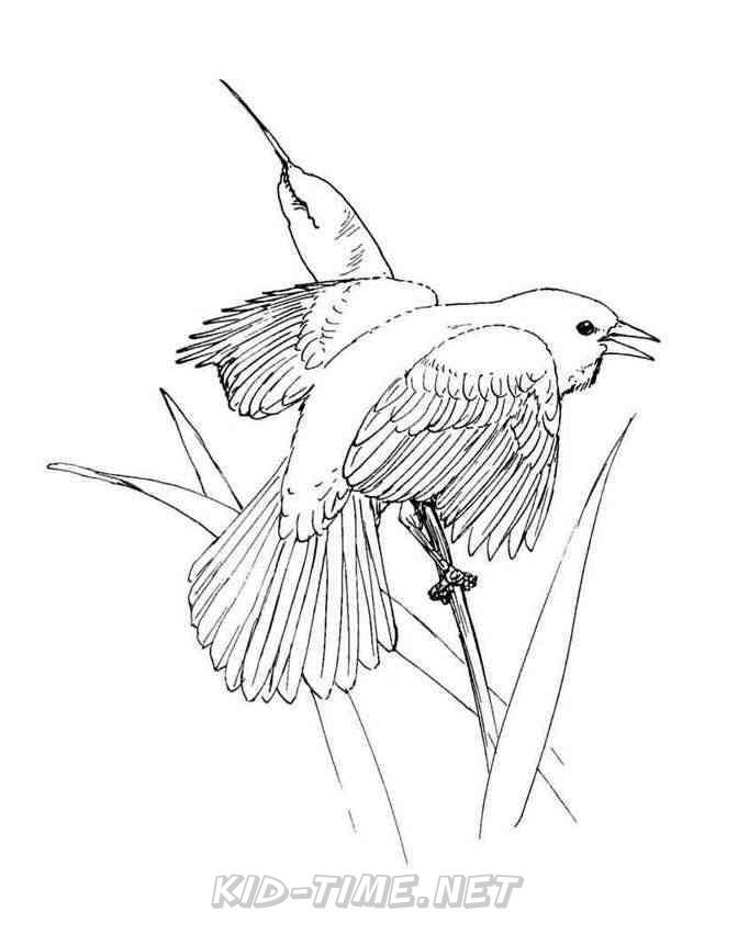 Birds Blackbird – Animals Coloring Book Pages Sheet