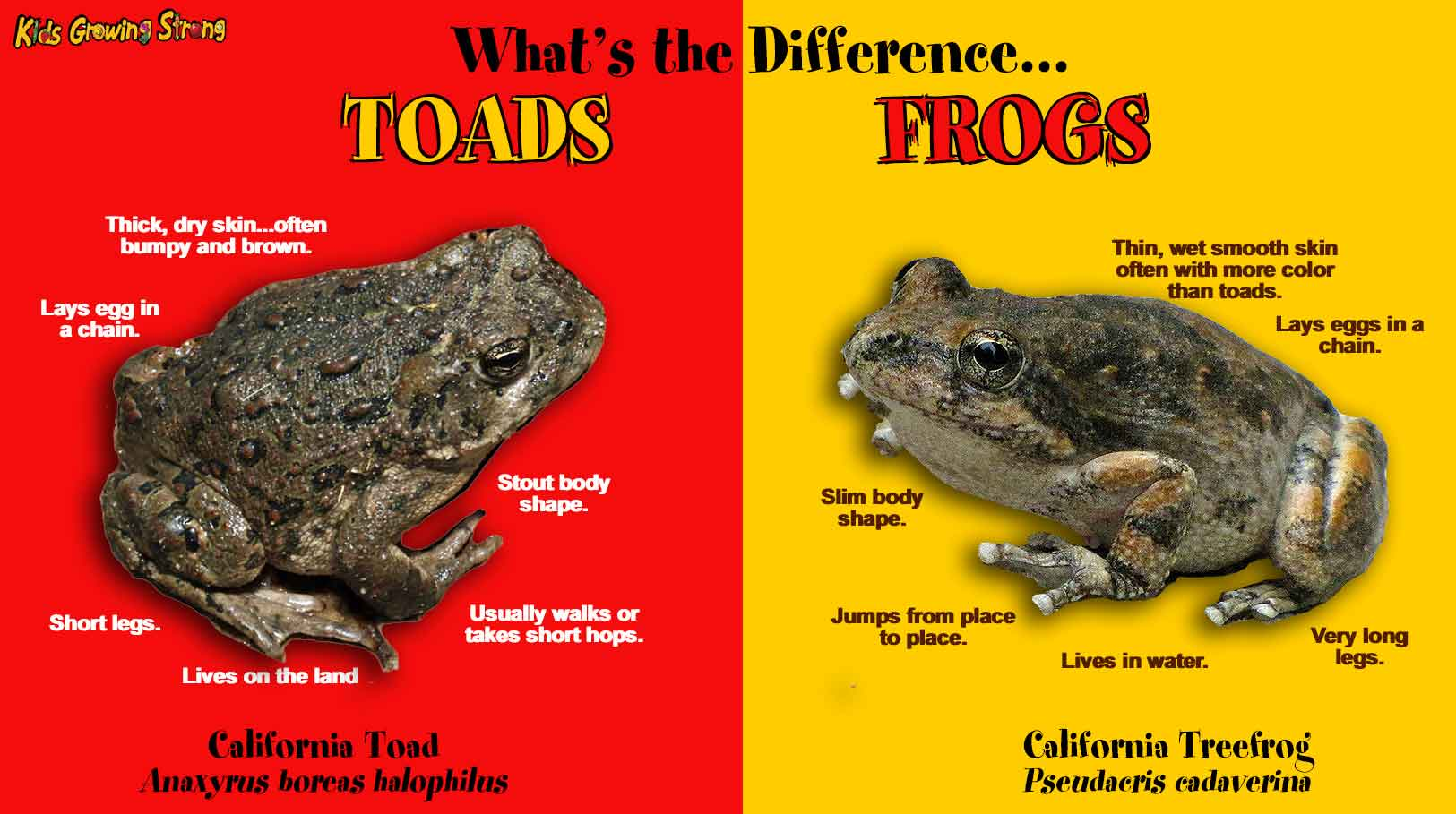Toads Kids Growing Strong