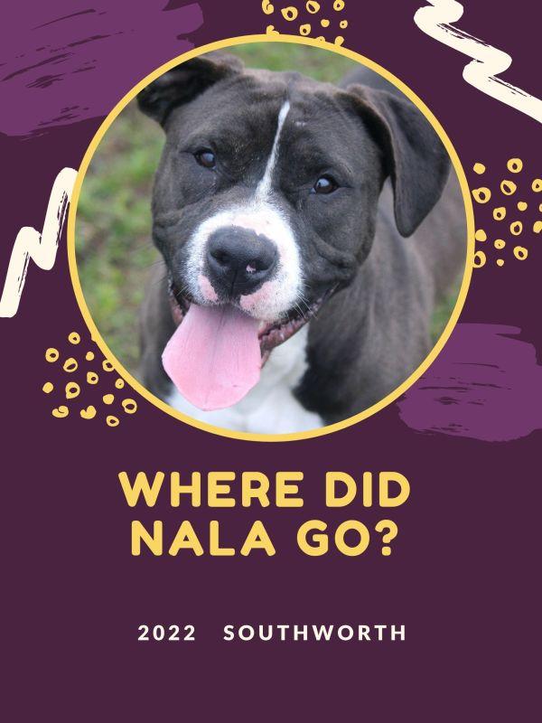 Where did Nala go?