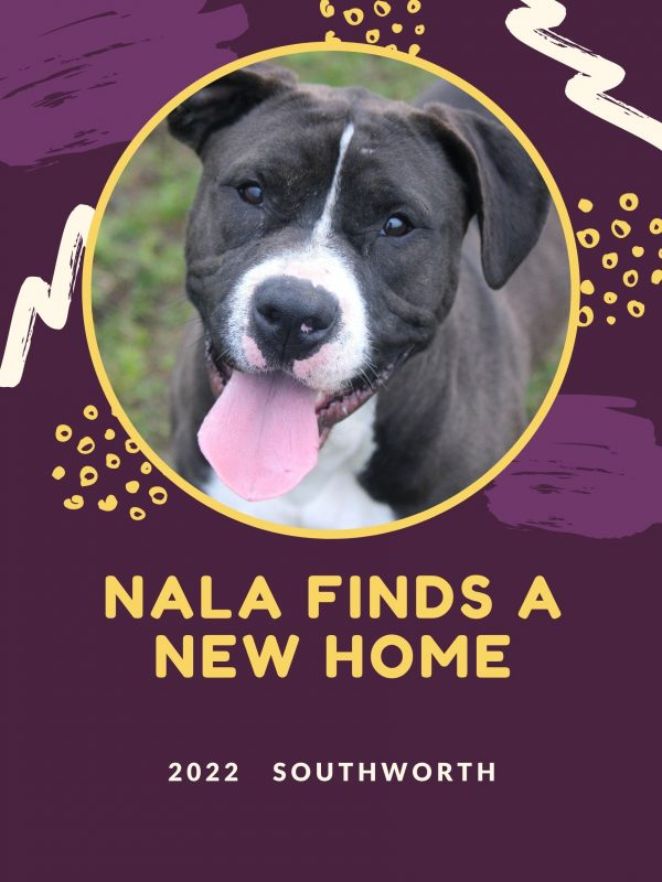 Nala finds a new home.