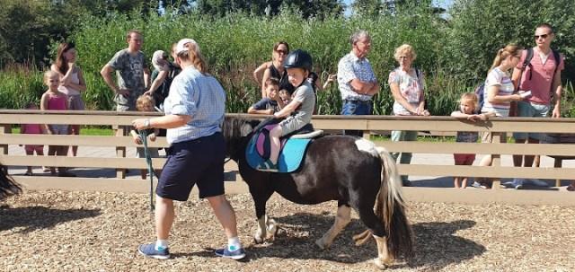 Pony Reiden Avonturenboerderij Molenwaard | Babies Kitchen