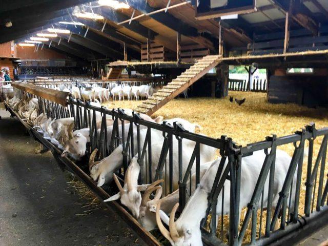 Uitstapje: Geitenboerderij Ridammerhoeve Amsterdam | Babies Kitchen