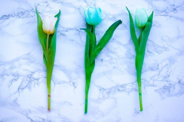 Tulpen Verven Testje  Babies Kitchen