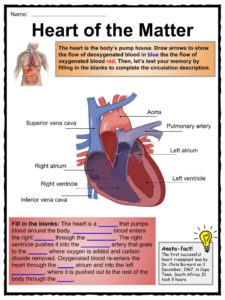 circulatory system heart diagram worksheet three phase electric meter wiring the human body facts, worksheets & key systems for kids