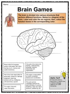 respiratory system blank diagram to label deer kill zone the human body facts, worksheets & key systems for kids
