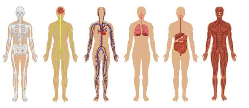 The Human Body Facts