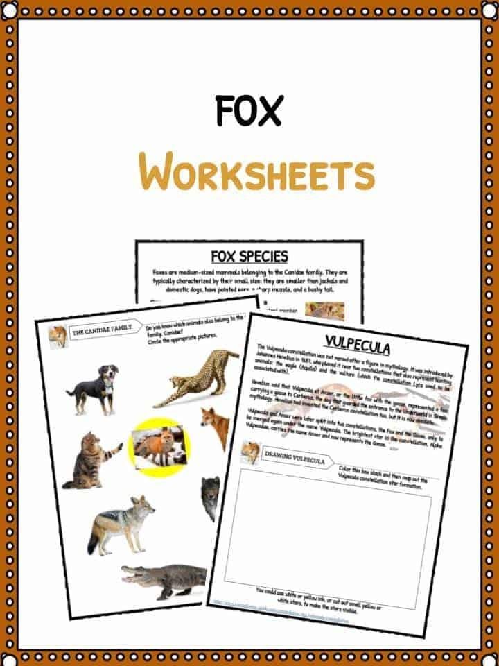 Fox Facts, Habitat Information & Worksheets For Kids