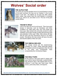 website that diagram sentences 99 ford expedition fuse panel wolf facts, worksheets & habitat information for kids