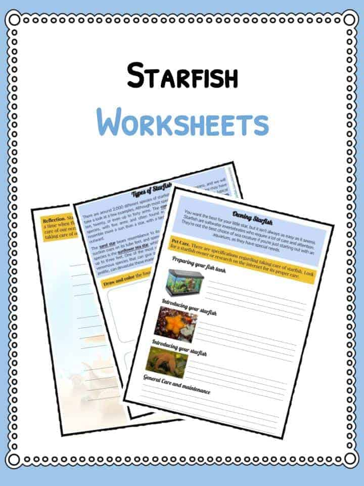 octopus water vascular system diagram ford steering parts starfish facts information and worksheets teaching resources download the
