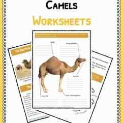 Lizard Life Cycle Diagram 5 Pin Relay Wiring Fuel Pump Camel Facts, Information & Worksheets For Kids | Teaching Resources