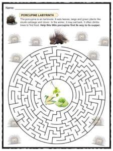Porcupine Facts, Worksheets, Species & Information For Kids