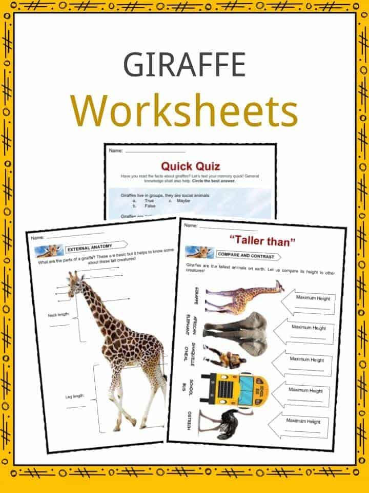 Giraffe Facts, Worksheets & Information For Kids