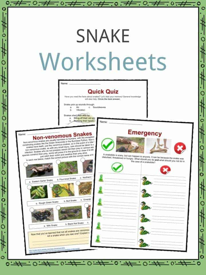Snake Facts, Worksheets, Habitat & Information For Kids