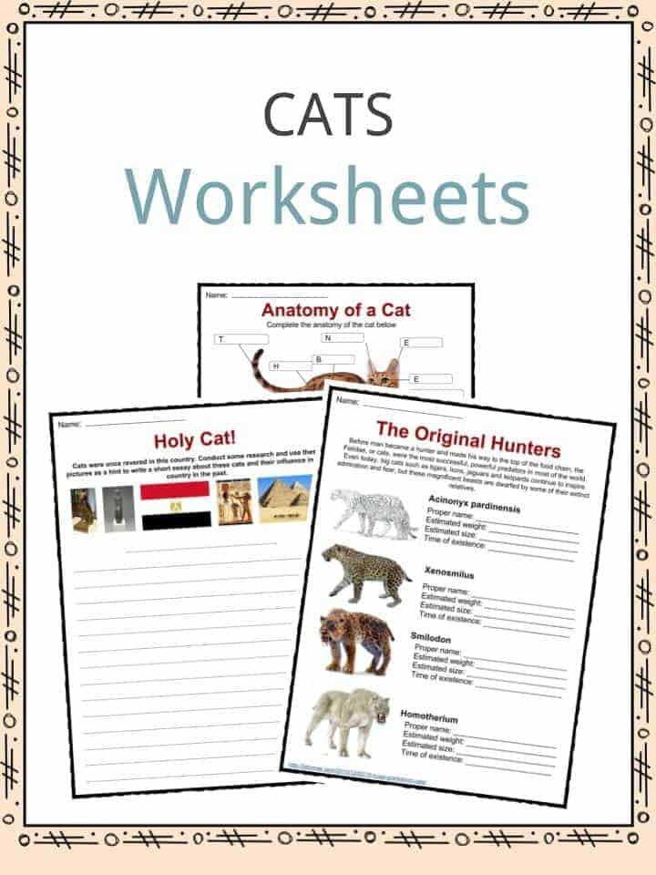 diet worksheets