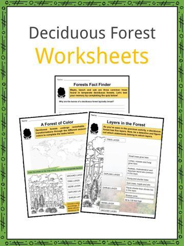 Deciduous Forest Worksheet