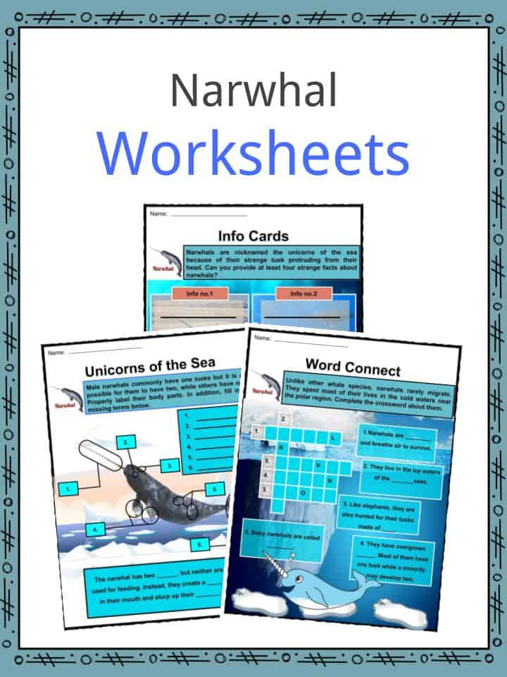 Narwhal Facts  Worksheets  Etymology  Anatomy  And Habitat
