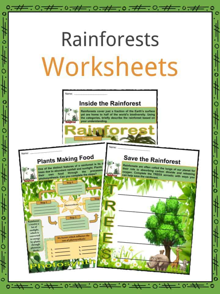 rainforests facts worksheets types location dangers for kids. Black Bedroom Furniture Sets. Home Design Ideas