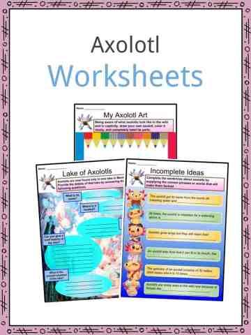 Axolotl Worksheets