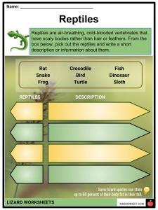 Lizard Facts, Worksheets, Habitat, Species & Information For