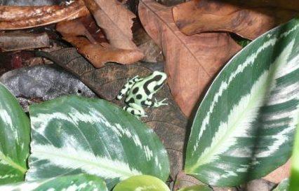 rainforest show, animal show