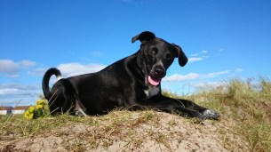 Image of black-and-white-dog-squinting-in-the-sun-lying-on-sand-dune