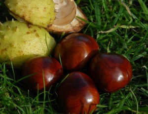 conkers-and-cases-in-grass