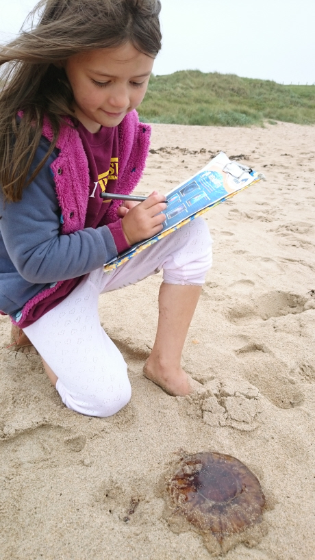 Image of girl-kneeling on sandy beach with clipboard and pen-investigating-jellyfish