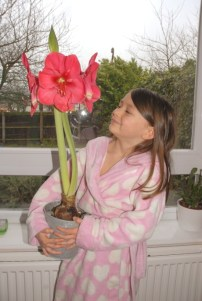 Image of large red-amaryllis-flower-in pot being-held-by-child in pink and white dressing gown in front of window overlooking garden