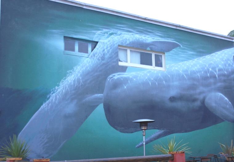 Image of painted sperm-whale-wall-art-graffitti-kaikoura