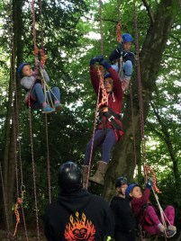 Image of children-in-harnesses-climbing-tree