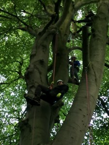 Image of man-in-climbing-harness-in-tree-woman-standing-on-branch-in-tree
