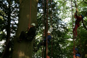 Image of man-woman-and-child-in-climbing-harnesses-in-tree