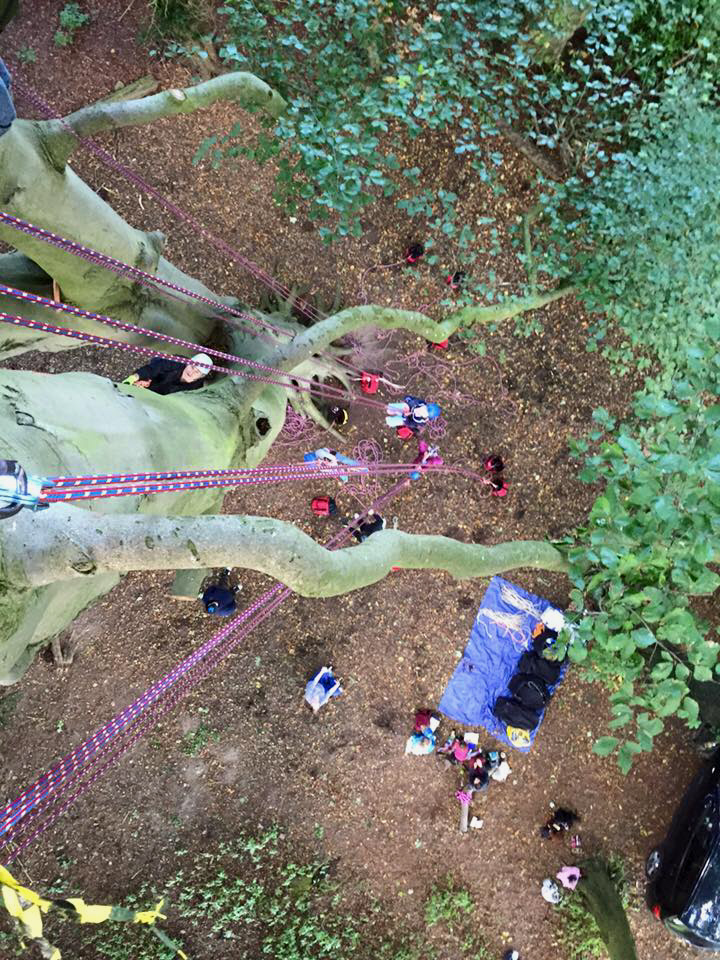Image of view-down-from-tall-tree-with-climbing-ropes