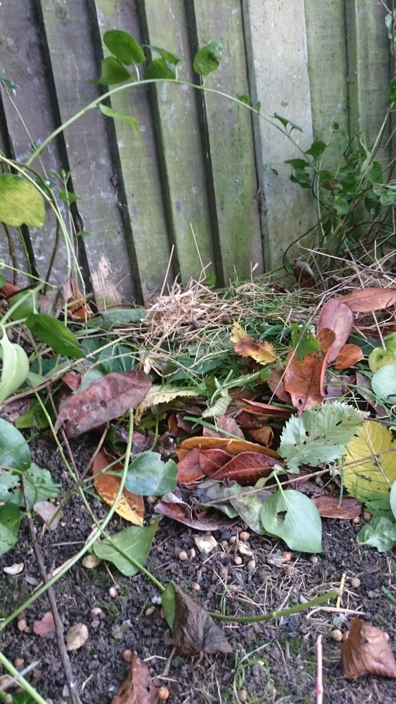 Image of pile of dry leaves and grass on soil next to fence