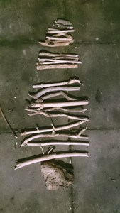 Image of pieces-of-driftwood-sticks-layed-on-ground-like-christmas-tree
