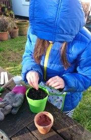 Image of girl-in-blue-coat-potting-seeds-at-table