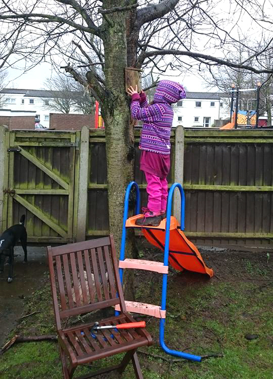 Image of girl-standing-on-slide-hanging-bidbox-to-a-tree-in-garden