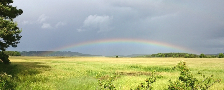 Image of rainbow over cornfields with dark clouds above