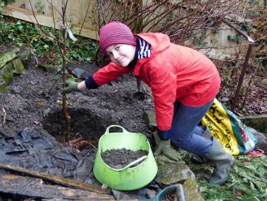 Image of Boy planting sapling in hole in soil