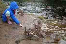 Image of girl in blue jacket squatting at riverside feeding mallard ducks