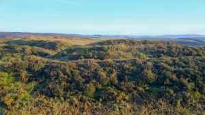 Image of heather-covered earthworks of ancient hill fort on high moorland plateau with blue sky