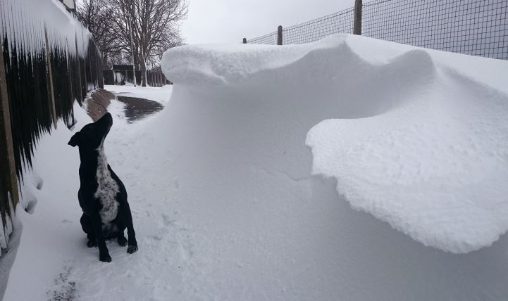 Image of black and white dog sitting next to snow covered fence under snow drift looking up at the top of it over his head