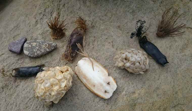 Image of stones, sea plants, paper-looking eggs and dark leather looking pouches displayed on a sandstone rock
