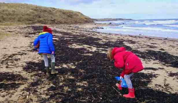 Image of two girls in blue and red clothes with backs to camera walking on piles of seaweed on beach looking into seaweed with sea and dunes behind