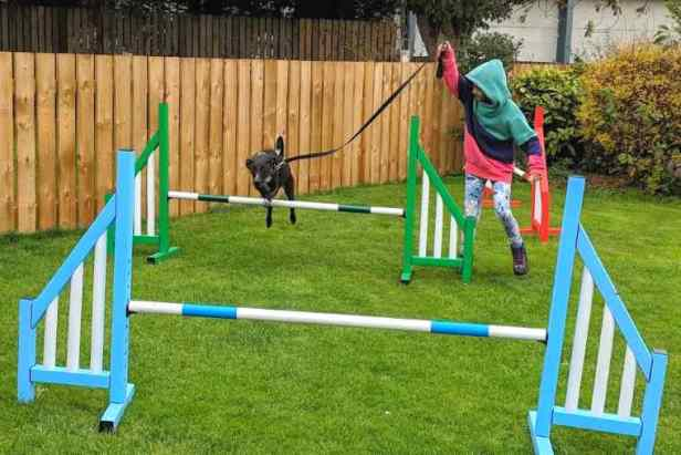 Image of child in coloured clothes with black dog on lead jumping over multicoloured striped dog agility training bars