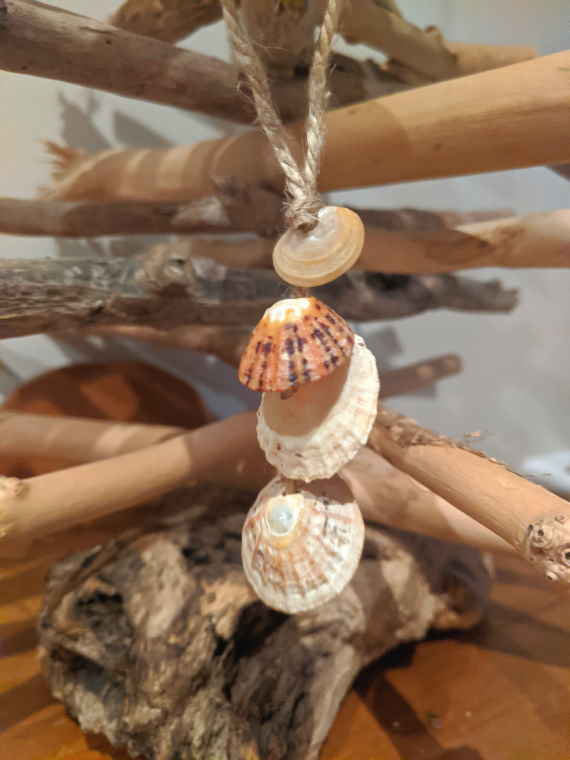 Image of 4 seashells attached to a piece of string and hung on a driftwood tree