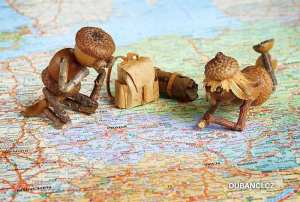 Two miniature stick and acorn figures with backpack sat on map of Czech Republic