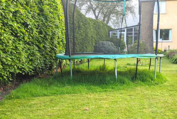 Garden trampoline next to leafy beech hedge with long grass growing under the trampoline