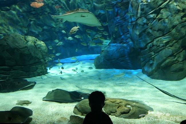 Taking the Kids to Ripleys Aquarium of Canada in Toronto
