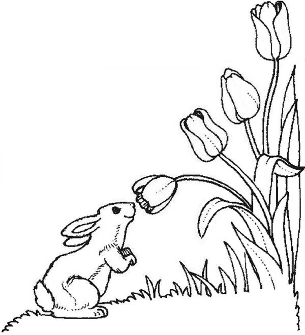 A Cute Little Bunny In Tulips Field Coloring Page : Kids